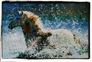 Fergus y el caballo de río